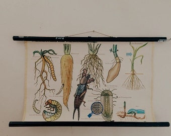 Vintage Botanical School Chart of Root Vegetables and Pests/Educational Pull-Down Chart/ gifts/German Poster of Birds