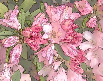 Rhododendron, Pink #1