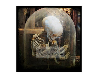 Child Skeleton Photography 12 x 12 Inch Print, Macabre Wall Decor, Halloween Wall Art, Large Print, Skull Art, Middle Finger, frighten