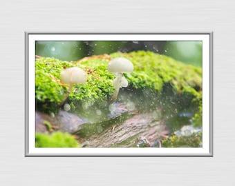 Fungus in Nature Photography, Flora Art, Nature Poster, Digital Download Print, Fungus in Nature Art, Nature Art