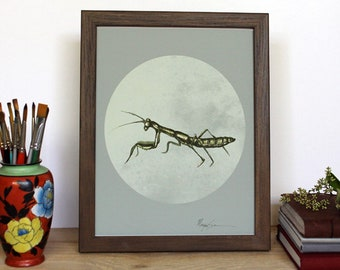 Pray Mantis - Art Print