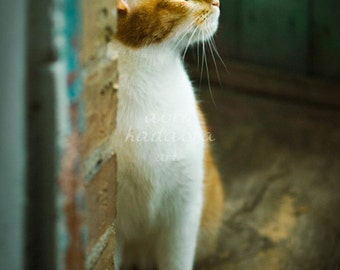 Ginger rustic cat Instant Digital Download Art Photography Printable, yellow and emerald home decor for cat lovers, animal photography, cute