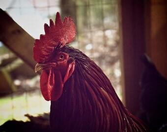Rustic Kitchen Decor Vintage Photo Rustic Red Rooster, Chicken Art, Kitchen Wall Decor, Chicken Photo