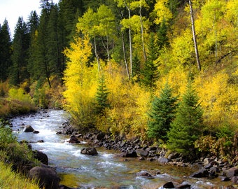 Aspen trees fall, creek stream photo, Colorado art, aspens photo, cabin decor, rustic home decor, fall tree decor, aspen trees art | Castle