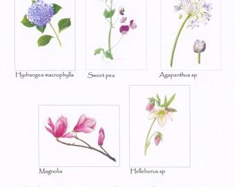 Card set - Flowers