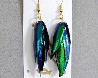 Iridescent Blue Green Beetle Wing Earrings with Gold Hooks and Rings