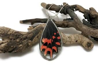 Butterfly, Butterfly jewelry, real butterfly jewelry, Real Butterfly Wing Necklace, butterfly Pendant, handmade real butterfly pendant