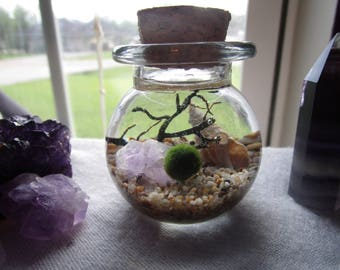 Marimo Moss Ball Terrarium // Moss Ball Aquarium // Desk Top Terrarium