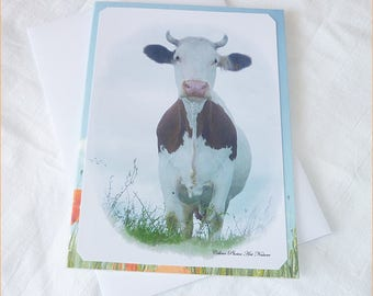 Dual postcard with a cow with its envelope