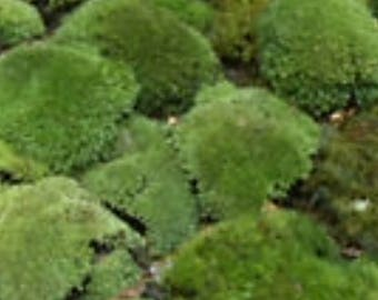 Woodland Mix Live Moss Assortment for shade gardens generous 2 Gallon Bag 21.99