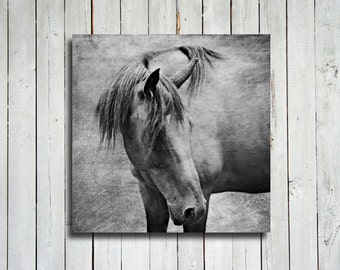 "Horse Watching - 30x30"" Canvas Print - Horse art - Horse decor - Horse Photography - Animal Photography - Black and White decor"