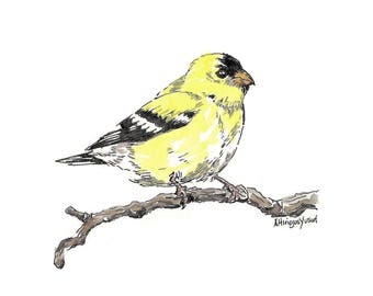 Goldfinch.  Matted Print from the Original Watercolor Painting
