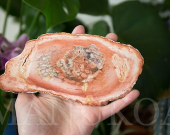 Petrified Tree Fern Fossil Slice | Tietea singularis | Permian Petrified Wood Display Specimen from Brazil | Healing Crystals | Crystal 14