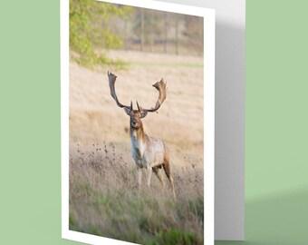 deer greeting card - deer card - stag deer - fallow stag - blank card - greetings card - nature card - UK wildlife - card for animal lovers