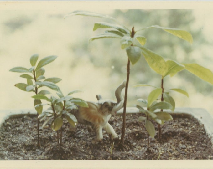 Vintage Snapshot Photo: Elephant in the Jungle [84667]