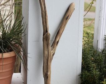 Bois flotté Y, bijoux Photo Prop, Natural Home Decor, approvisionnement de l'Art de Boho, décoration de plage