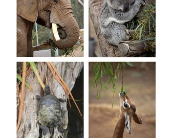 San Diego Zoo Photo Note Cards Set of 8