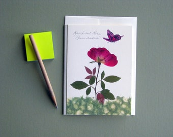 Knock Out Rose, pink butterfly, anniversary card, red roses, greeting card no.1081