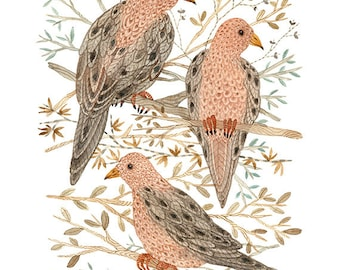 mourning doves bird art print