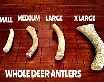 Deer antler dog chews-free shipping!