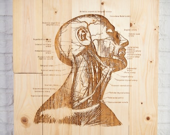 Wooden recycled with old illustration of Anatomy sign