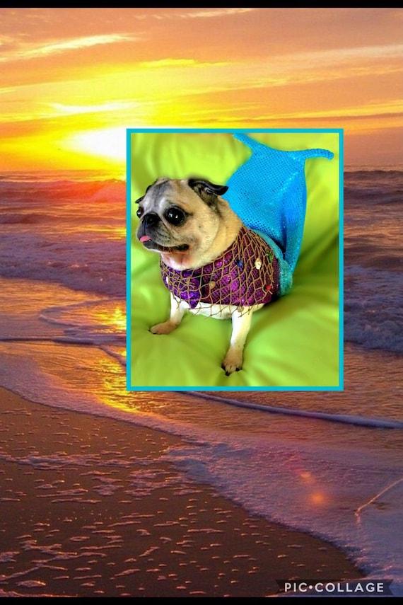 & Mermaid dog costume Mermaid Halloween dog costume