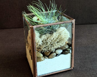Copper Accented Glass Air Plant Terrarium Kit with lichen, reindeer moss, river rock and sand great gift
