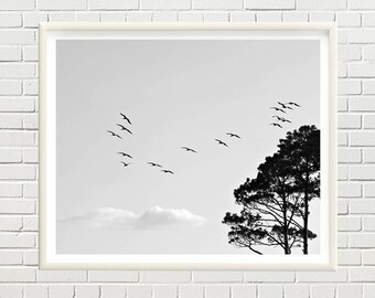 Flying birds, sky and clouds, pine trees, black and white printable photo, printable art, landscape print - instant download, digital file