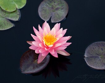 Fine Art Print, Lily Art, Pink, Water Garden, Lily Pads, Sunfire Lily, Waterlily, Flower Art, Botanical Print, Home Decor, Floral Print