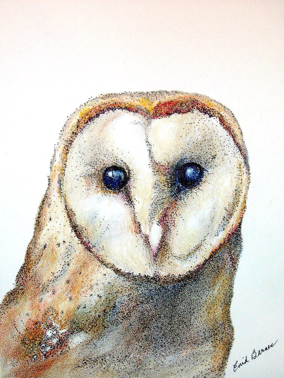 Original Barn Owl Pen And Ink Colored Pencil Pointillism