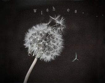 Dandelion Wishes photo,  Greeting Cards, Tote, Pillow, Steel Coffee Cup or Photo