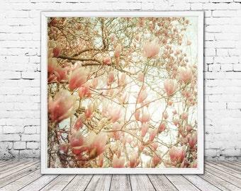 pastel pink magnolia decor - flower photography - magnolia tree print - floral wall art