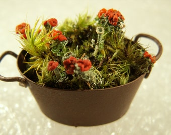 """Fairy Garden """"Flower"""" Pot w/ Live British Soldier Cladonia Lichen Moss Miniature Bucket Container Washpan Decor"""