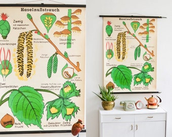 Botanical poster hazelnut, botanical print, vintage wallchart, pull down chart, school chart hazelnut, plant school chart, educational map