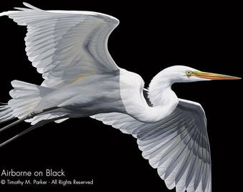 Contemporary Egret Painting Reproduction • AIRBORNE • Tropical Bird • Black and White Bird Art • Black and White Art • Great White Egret
