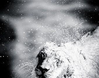Lion Fine Art Photography - Wildlife Wall Art - Modern Black and White Animal Photo - African Artwork