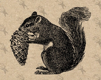 Vintage image Squirrel picture Instant Download printable clipart digital graphic for scrapbooking fabric burlap t-shirts transfer HQ300dpi