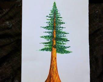 Redwood Dawn