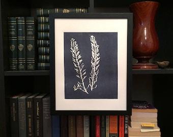 Desert Botanicals, Desert plants, desert art, botanical print, gray botanicals, gray art, charcoal gray art, Southern Utah, art gifts