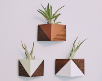 Triangle Magnet w/Air Plant (Walnut Stain)