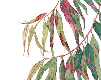 A touch of red: eucalyptus leaves print A4, 10x8; Australian home decor; botanical wall art print; tree branch illustration; red green leaf