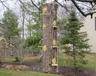 Hanging log suet feeder