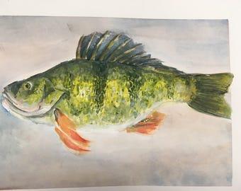 Bass watercolor drawing