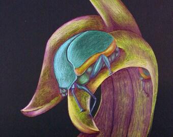 Green Beetle Blank Inside Card