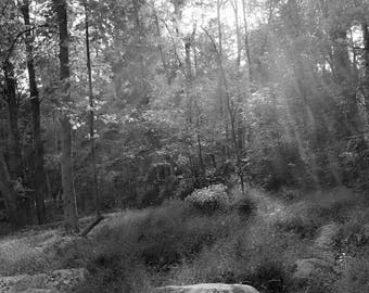 Black and White Landscape Photography, Forest, Sunlight, Nature Picture, Home Decor, Wall Art, Tree Photograph, Bucks County, Pennsylvania,