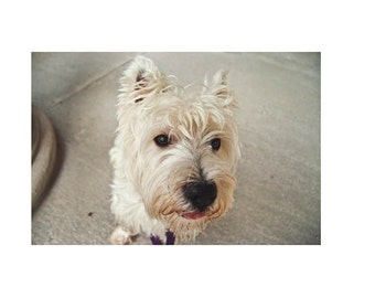"""Westie Gift Book -- """"POLITICAL ANIMAL"""" --  Coffee Table Book -- Printed Artist's Book -- Dog Book -- Dog Lover's Gift"""