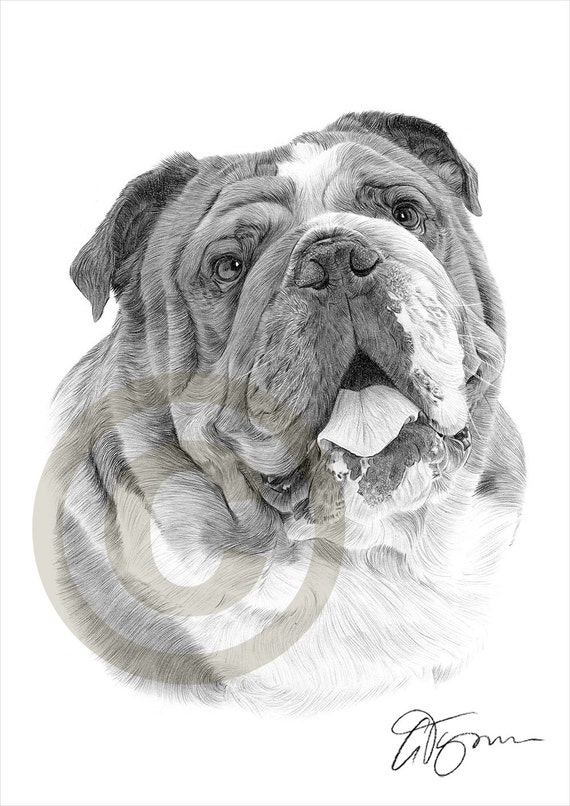 crayon de bulldog anglais chien dessin imprimer oeuvre. Black Bedroom Furniture Sets. Home Design Ideas