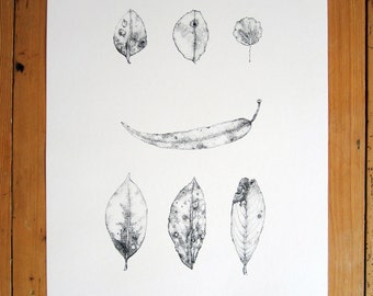 Foliage // Large Original Hand-Pulled Screen Print on Paper