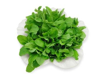 200+ seeds (.3 grm) Arugula Salad Greens  Oil Buy 2 orders get 1 order FREE   #8