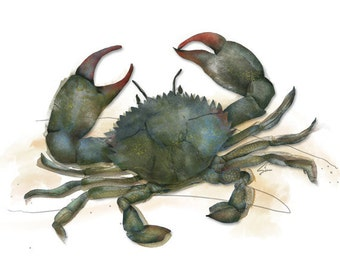 Blue Crab - nautical blue crab watercolor style art print, beach house decor by Red Creek Design Co